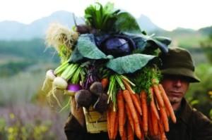 Opus Restaurant - Worcester Produce Carrots Turnips